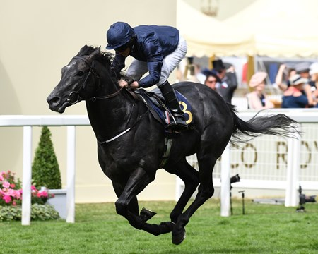 Caravaggio wins the 2017 Commonwealth Cup at Royal Ascot