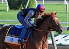 Irish War Cry training ahead of the Belmont Stakes