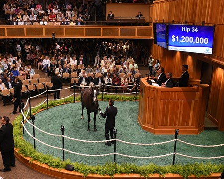 Hip 34, 2015 August Fasig-Tipton Saratoga Selected Yearling Sale Tapwrit