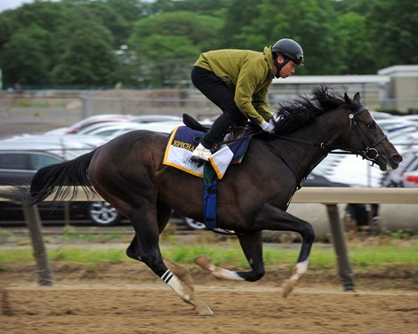 Epicharis Works For Belmont On Training Track Bloodhorse