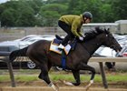 Epicharis works Tuesday on the training track at Belmont Park