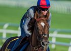 Irish War Cry Takes First Spin Around Belmont Park
