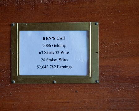 stall card for Ben's Cat in Spring Ridge barn. Ben's Cat after arriving at Chris and Bayne Welker's Spring Ridge Farm near Versailles, Ky., on June 29, 2017 June 29, 2017 in Versailles, Kentucky.