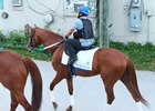 Gun Runner heads to the track for training at Churchill Downs June 12