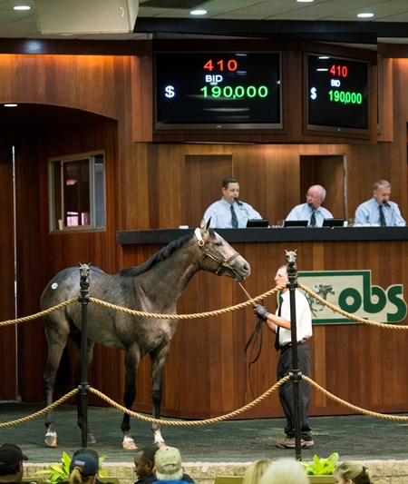 OBS June 2017 Hip 410 Stay Thirsty - Sweetest Song   sold $190,000  @ OBS  in Ocala Fl,June 13 2017