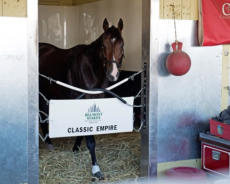 Classic Empire, the morning after the Belmont Stakes Presented by NYRA Bets (G1) at Belmont Park  on June 11, 2017 in Elmont, New York.