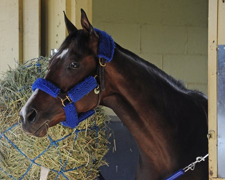 Songbird - Belmont Park, June 7, 2017