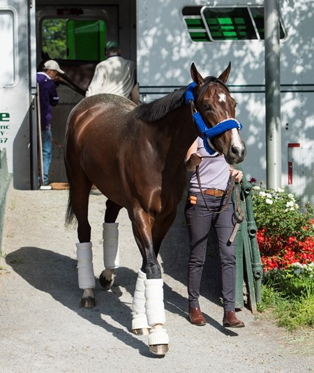 Songbird arrives from her home base in California in the hands of Jerry Hollendorfer's assistant Christina Jelm Wednesday June 7, 2017 at Belmont Park in Elmont, N.Y. where she will run Saturday in the Ogden Phipps.