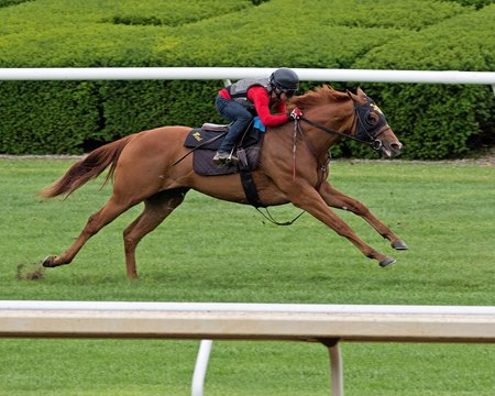 Fairyland works over the turf course at Keeneland