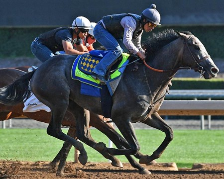 Arrogate - Santa Anita - June 25, 2017