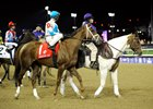 The Todd Pletcher-trained Life At Ten during the 2010 Breeders' Cup Ladies' Classic post parade