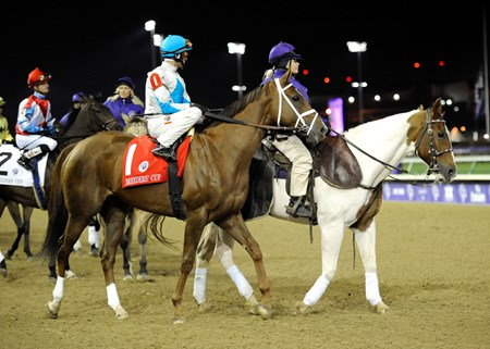 Photo by Skip Dickstein - Breeders' Cup 2010 - Life At Ten