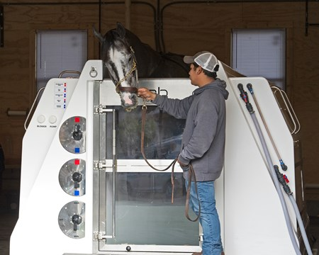 Tapwrit in equine water therapy