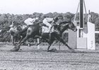 Tom Fool wins the 1953 Metropolitan Handicap