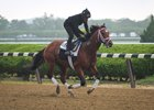 Patch gallops at Belmont June 1