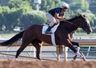 Paradise Woods, Arrogate Get to Work at Santa Anita