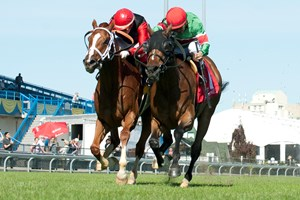 Tower of Texas (right) is the highweight for the Aug. 19  grade 2 Play the King Stakes at Woodbine. The field includes familiar foes such as Calgary Cat (left).