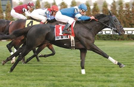 Better Talk Now Horse Profile Bloodhorse