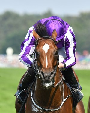 Highland Reel may not find the ground to his liking in the QIPCO Champion Stakes