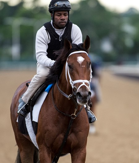 Patch is out for his morning exercise before the Belmont Stakes June 7, 2017 at Belmont Park in Elmont, N.Y.