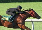 Into Mischief Colt Tops OBS Under Tack Session