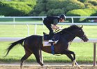 Epicharis in his last day of training at Belmont Park June 6, before his soundness issues began