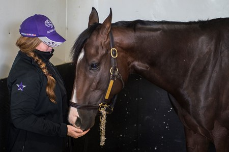 Classic Empire stands in his stall with handler Sara Campion after being declared out of the Belmont Stakes June 7, 2017 at Belmont Park in Elmont, N.Y.