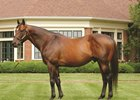 Champion Sire Smart Strike Euthanized