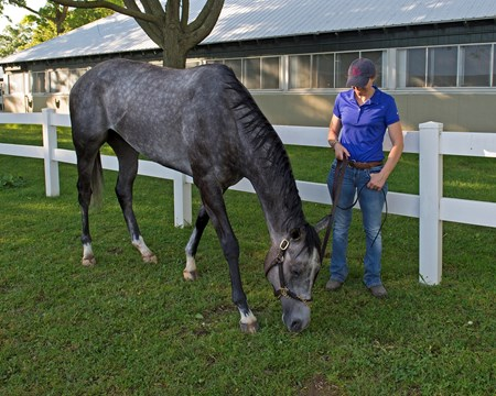 Ascend with Alice Clapham the morning after the Belmont Stakes Presented by NYRA Bets (G1) at Belmont Park  on June 11, 2017 in Elmont, New York.