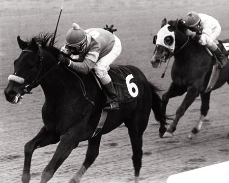 Wolfie's Rascal was a multiple graded stakes winner co-owned by Cohen early in his career