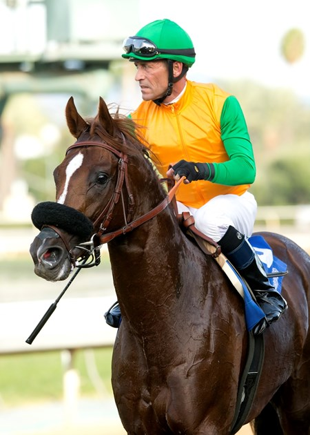 Om wins the 2015 Twilight Derby