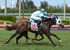 Raison Tiz gets a head in front at the wire on the Gulfstream Park turf