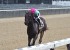 Seymourdini returns to graded stakes company in Belmont's Bold Ruler Handicap (G3)