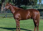 Florida-Based Sire Kantharos to Hill 'n' Dale