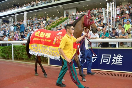 Designs On Rome parades for the last time at Sha Tin Racecourse in front of his faithful fans.