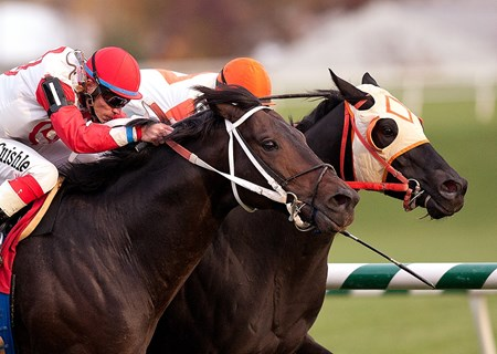 Ben's Cat (on the rail) ridden by Julian Pimentel wins the $50,000 Find Handicap for older horses on the turf at Laurel Park on Saturday, Oct. 30, 2010.
