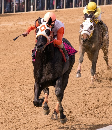 Ben's Cat Wins His Third Jim McKay Turf Sprint BALTIMORE – 5-16-14