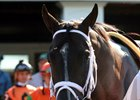 Girvin in the paddock prior to winning the Haskell Invitational