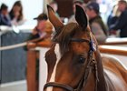 Records Tumble At Tattersalls July Sale