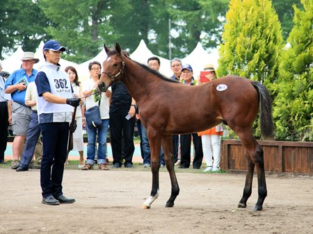 The second-highest price in the sale's 20-year history was established July 11 when this Deep Impact colt brought ¥580 million (US$5.087 million)
