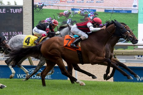 Go Bro Upsets King Edward At 44 1 Bloodhorse