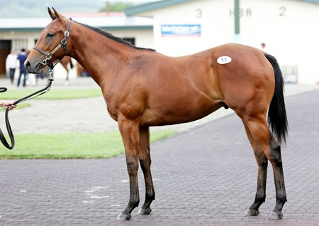 Hip 11, a colt by Lord Kanaloa, topped the Hokkaido Selection yearling sale