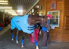 Irish War Cry in Herringswell Stables' barn at Fair Hill Training Center