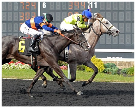 Into the Gray - Maiden Win, Presque Isle Downs, July 27, 2017 First winner for Graydar