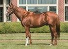 Leading Sire City Zip Dead at 19