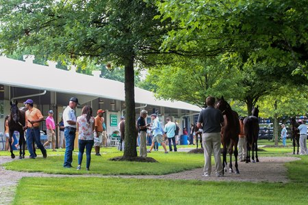 Buyers inspect horses under the trees at Fasig-Tipton's Newtown Paddocks