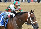 Grade 1 winner Firenze Fire is likely to run in the Feb. 3 Withers Stakes at Aqueduct Racetrack