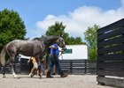 Fasig-Tipton's Racehorse Sale Provides Opportunity