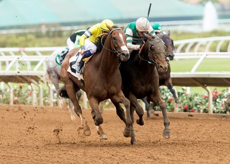 Curlin Road (outside) and Hard Aces duel to the wire in the Cougar II Handicap
