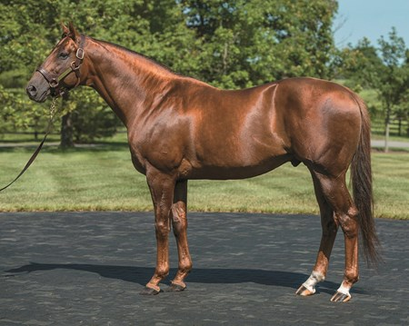 Sidney's Candy Conformation at Winstar Farm